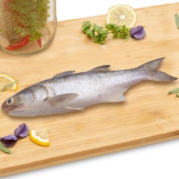 Threadfin Whole (Kukup) 午鱼 (500g-600g)