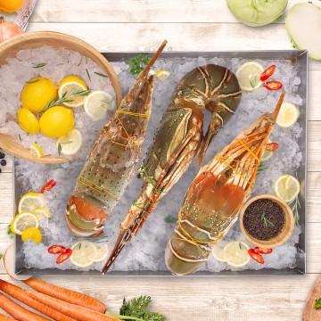 Sea Lobster 海龙虾 (Approx 500g-600g)