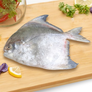 Chinese Pomfret Whole 斗鲳 (500g-600g)