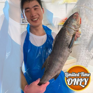 PROMOTION! Balai Threadfin 巴萊午鱼 (3.5kg)