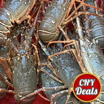 CNY DEALS! Sea Lobster 海龙虾 (refer description)