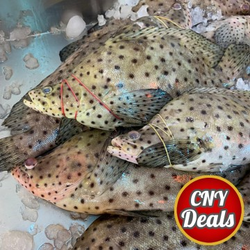 CNY DEALS! Rat Grouper 老鼠斑 (refer description)