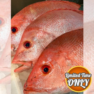 PROMOTION! Red Snappers 红鸡 (refer to description)