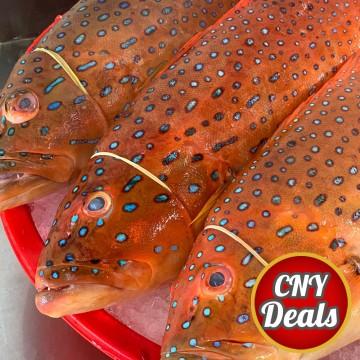 CNY DEALS! Seven-Star Grouper 七星斑 (refer description)